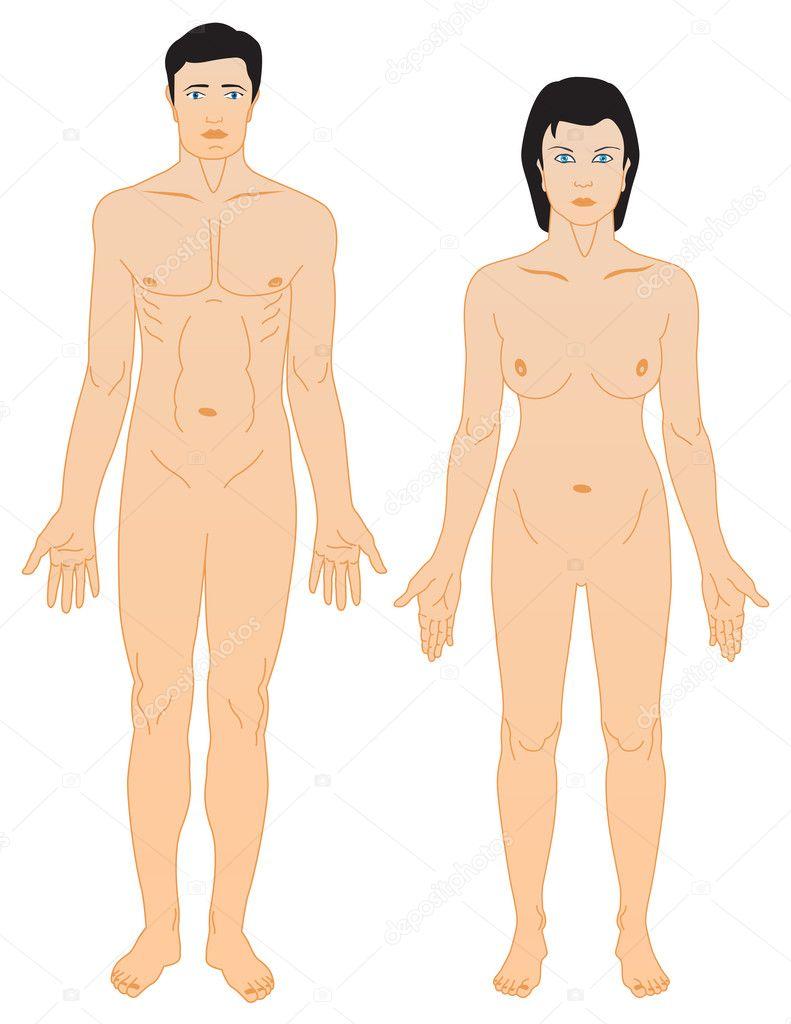 man een vrouw anatomie — Stockvector © bgmgigi #8949076