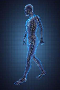 Walking man radiography