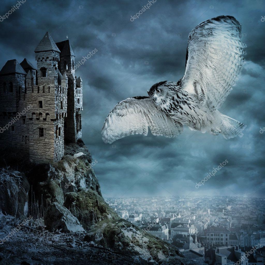 Flying owl bird