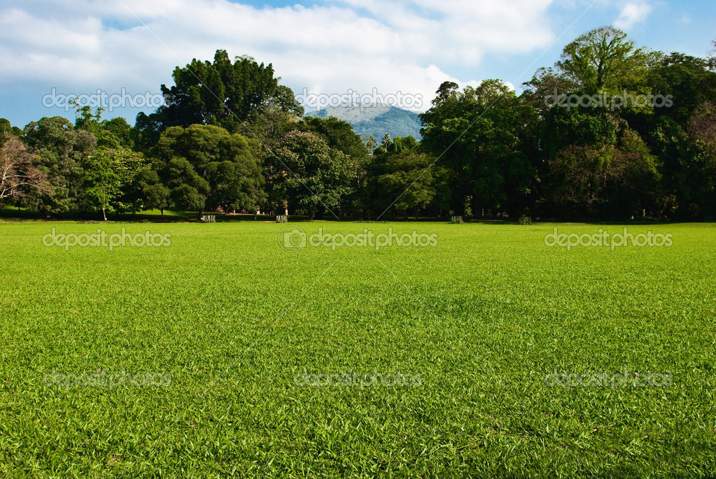 Green grass meadow with trees and mountain