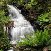 deštný prales vodopád