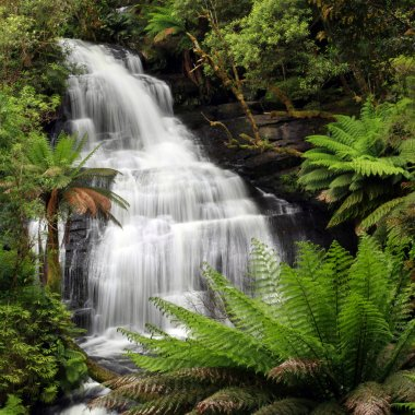 Waterfall in lush ferny rainforest. XXXL file. Triplet Falls, Otway Ranges, Victoria, Australia. stock vector