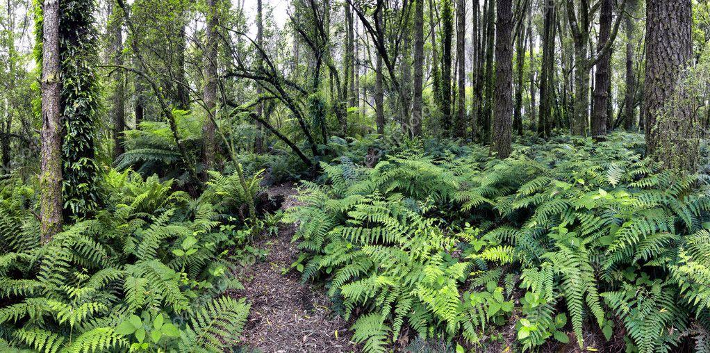 Forest Panorama XXXL