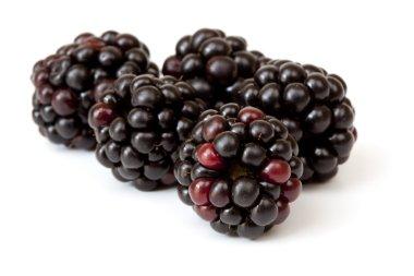 Blackberries Over White