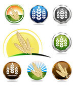Photo Wheat icon collection