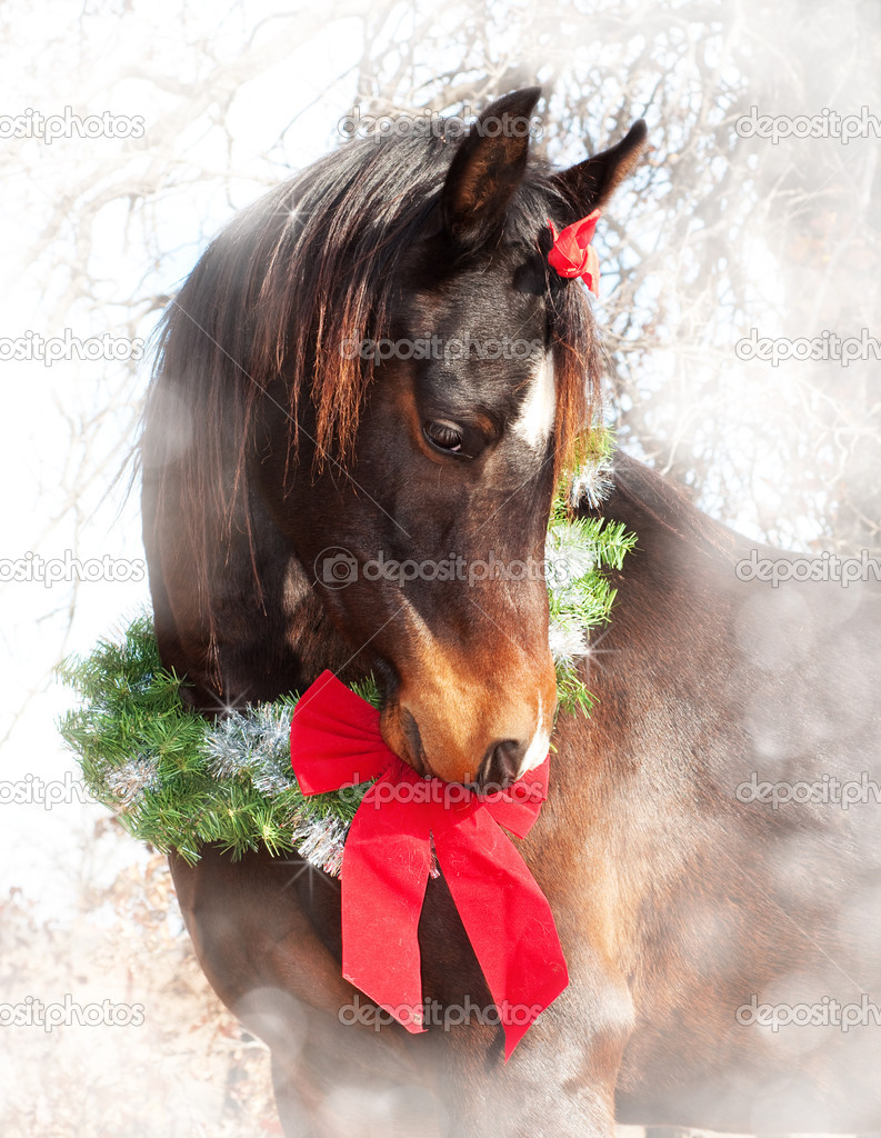 Dreamy Christmas image of a dark bay Arabian horse wearing a wreath