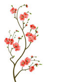 Fotografie Cherry blossom branch abstract background