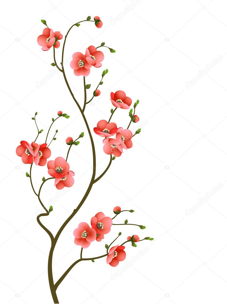 Abstract background with cherry blossom branch isolated stock vector