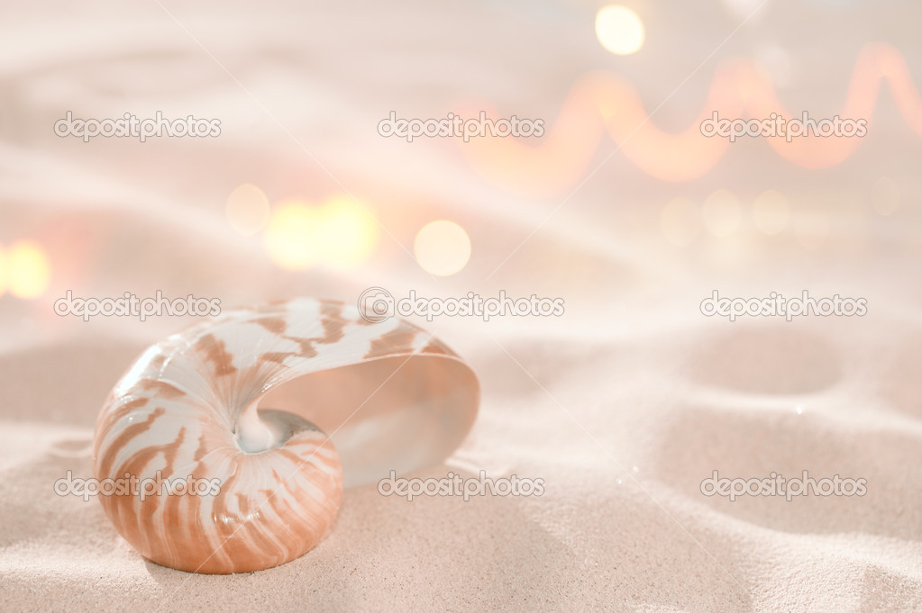 Nautilus shell on beach sand and tropical golden sunlight