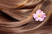 Beautiful healthy shiny hair texture with a flower, hair care co