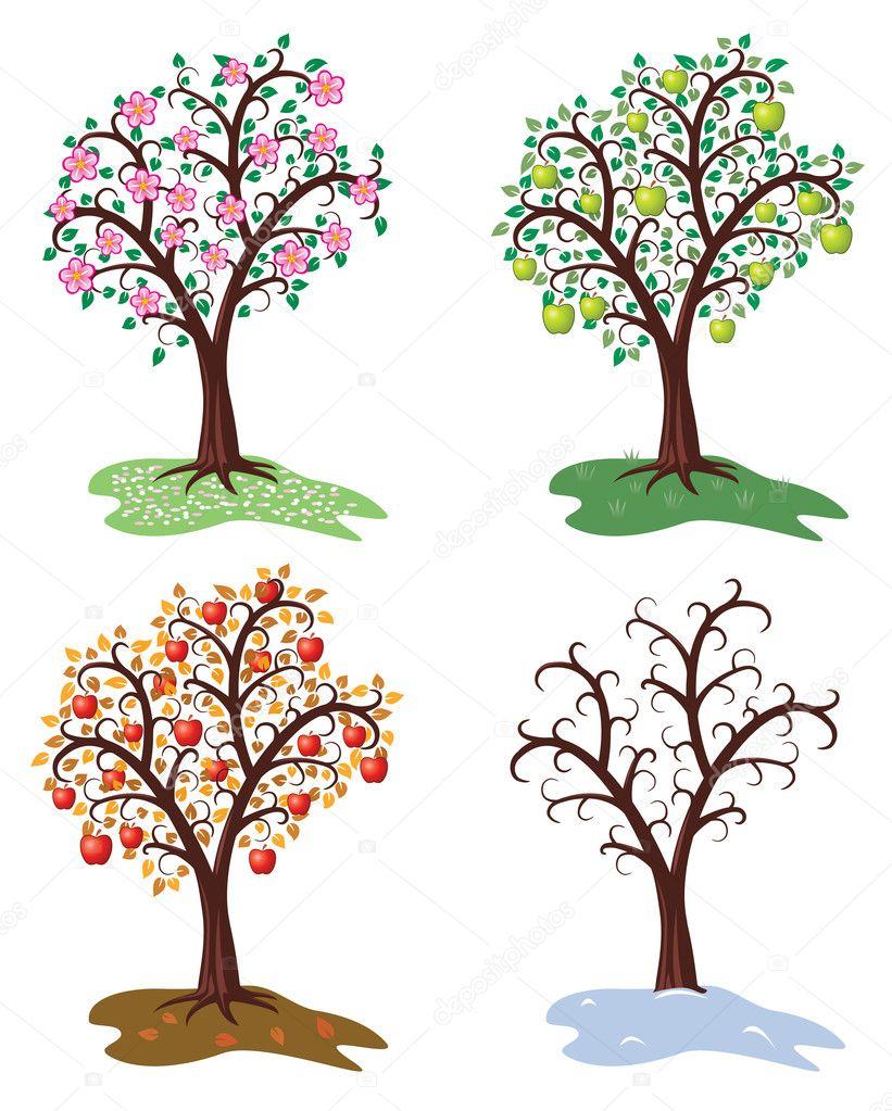 Vector four seasons of apple tree