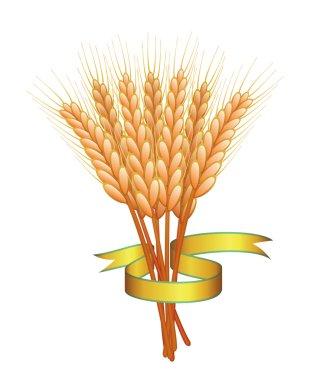 Vector wheat ears