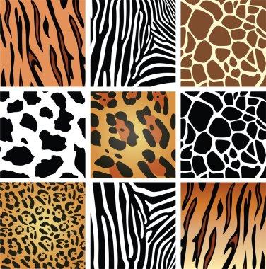 Vector animal skin textures of tiger, zebra, giraffe, leopard and cow stock vector