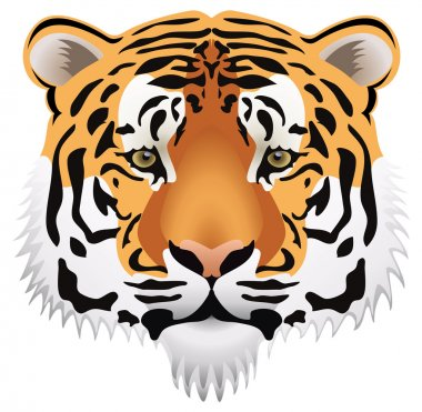 Vector tiger head