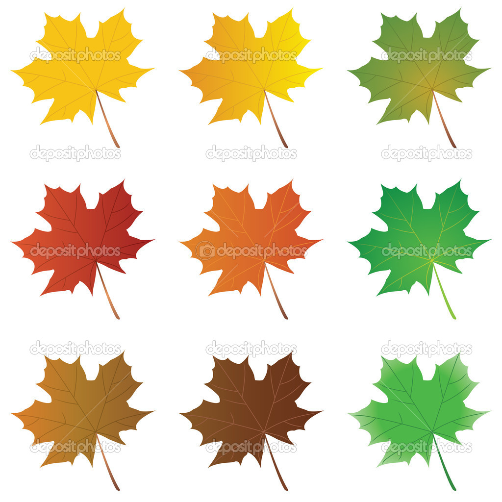 Vector set maple leaves