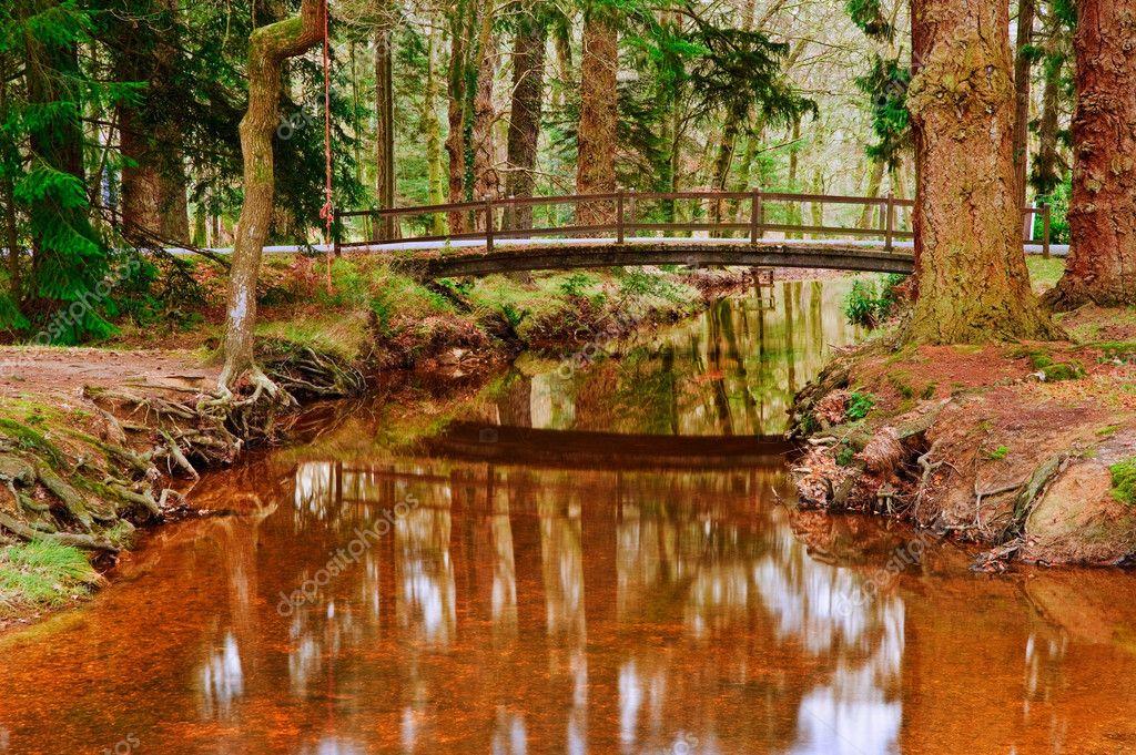 разнообразие рязань затишье фото лес сады себе исполнительница рассказывает