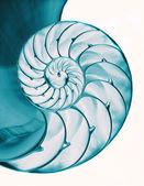 Nautilus-Schaleninnenraum