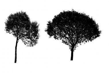 illustration of tree silhouettes