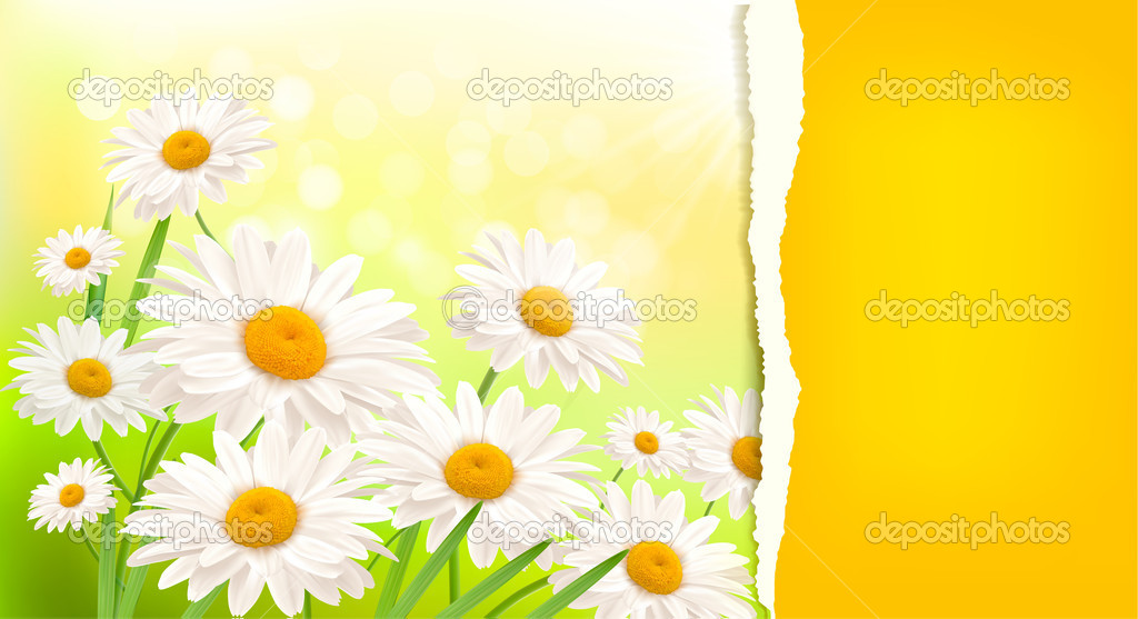 Nature background with fresh daisy and ripped paper
