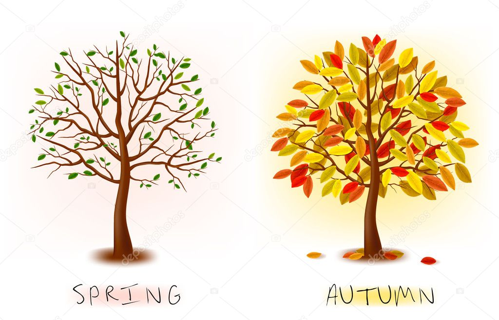 Two seasons - spring, autumn. Art tree beautiful for your design. Vector illustration.