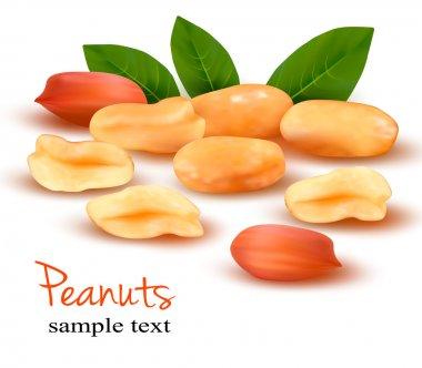 Peanuts Vector illustration