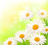 Fotografie Beautiful background with grass and daisies Vector