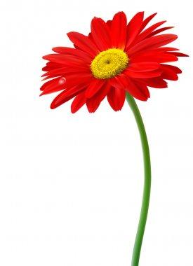 """Картина, постер, плакат, фотообои """"красный цветок перед белым фоном """", артикул 9497331"""