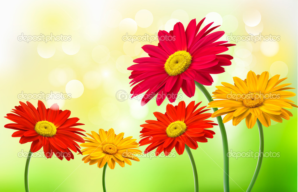 Background with beautiful gerber flowers Vector
