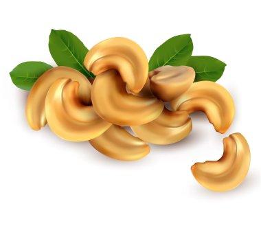 Cashew nuts Vector illustration