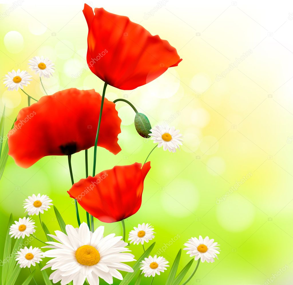 Spring background with red poppy and daisy Vector