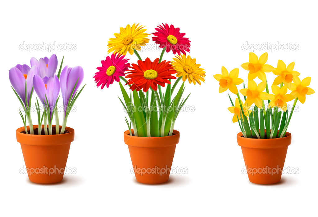 primavera de flores coloridas en vector de macetas Vector de stock