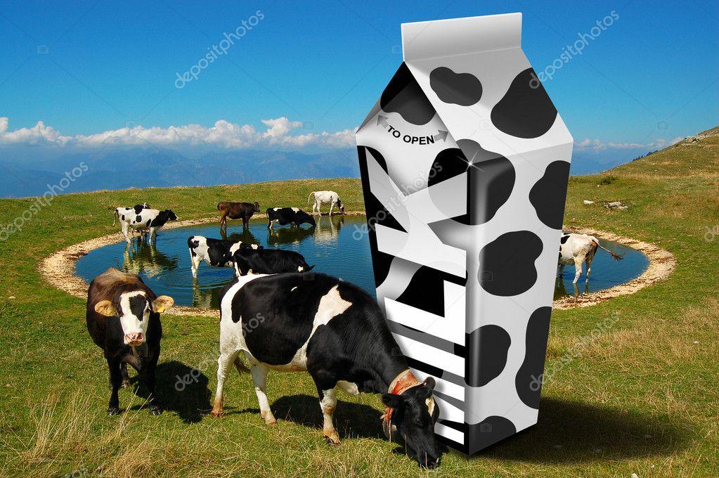 Cows grazing - Milk packaging