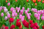fiore giardino