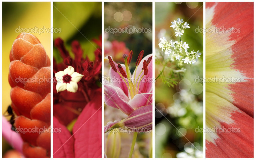 Collection of five flowers photos with shallow depth of field