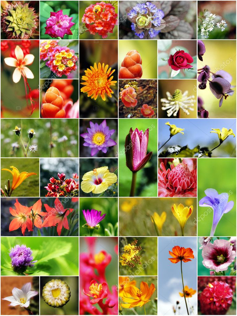 Collection of variety of flowers in different shapes, colors and