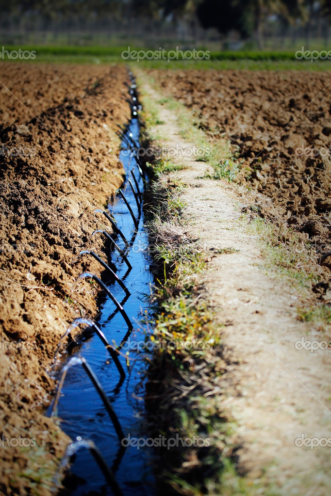 Drip Irrigation in a Farm