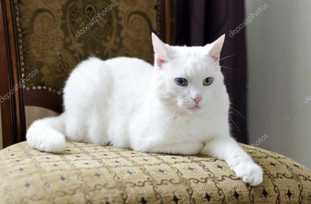 Cat S Eye Thailand