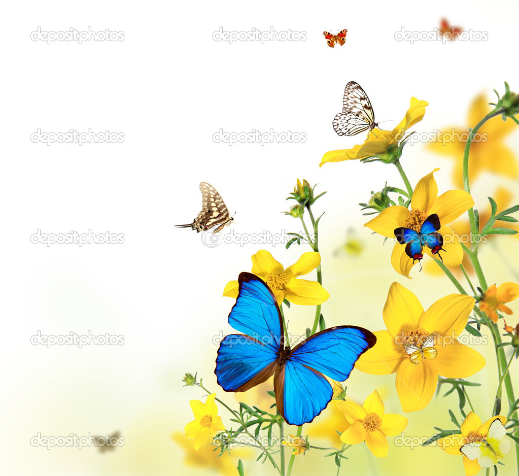 Beautiful flower background with exotic butterflies