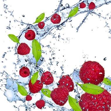 Fresh raspberries falling in water splash stock vector