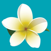 A vector illustration of a yellow and white frangipani with leaves on a blue background.
