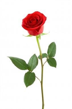 """Картина, постер, плакат, фотообои """"одна красная роза ."""", артикул 8522709"""