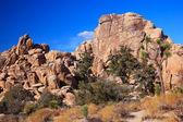Valle nascosta roccia yucca brevifolia deserto mojave joshua tree n