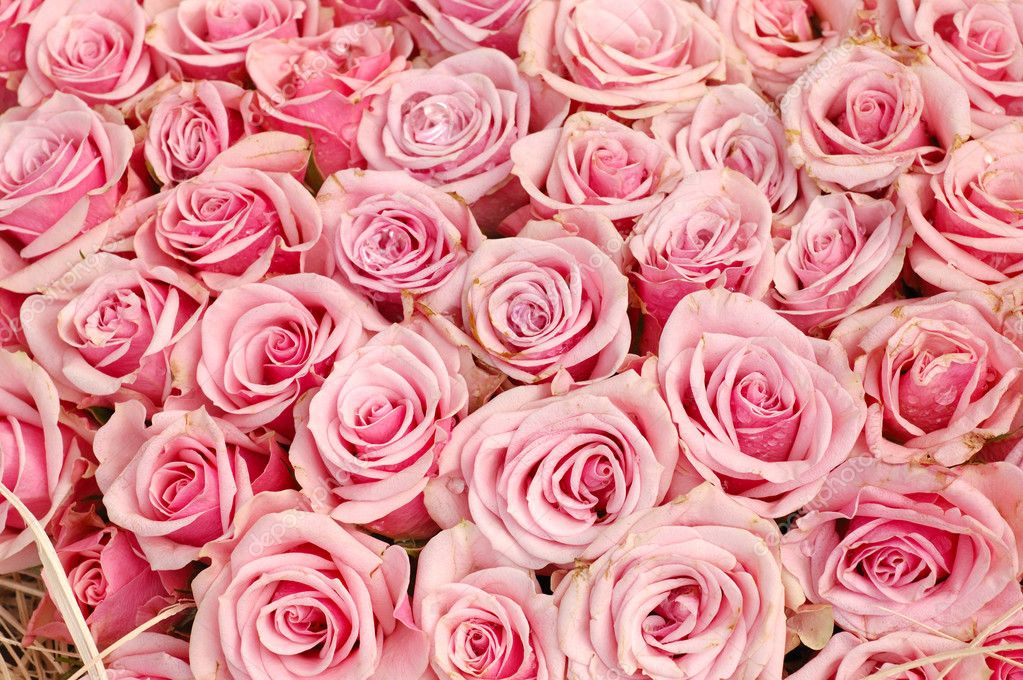 Sfondo di rose rosa foto stock bedobedo 9145484 for Foto di rose bellissime