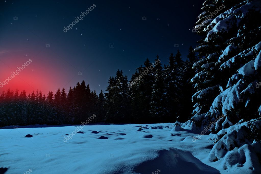 Фотообои Winter forest at night