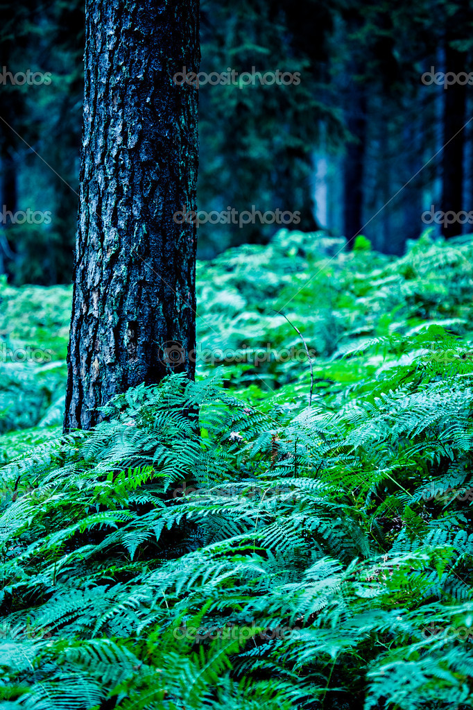 Фотообои Night forest