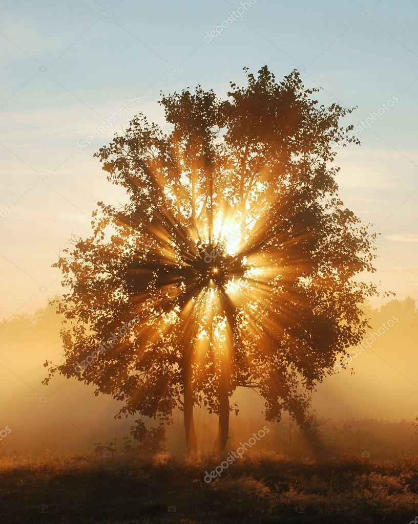 Фотообои Shining Tree