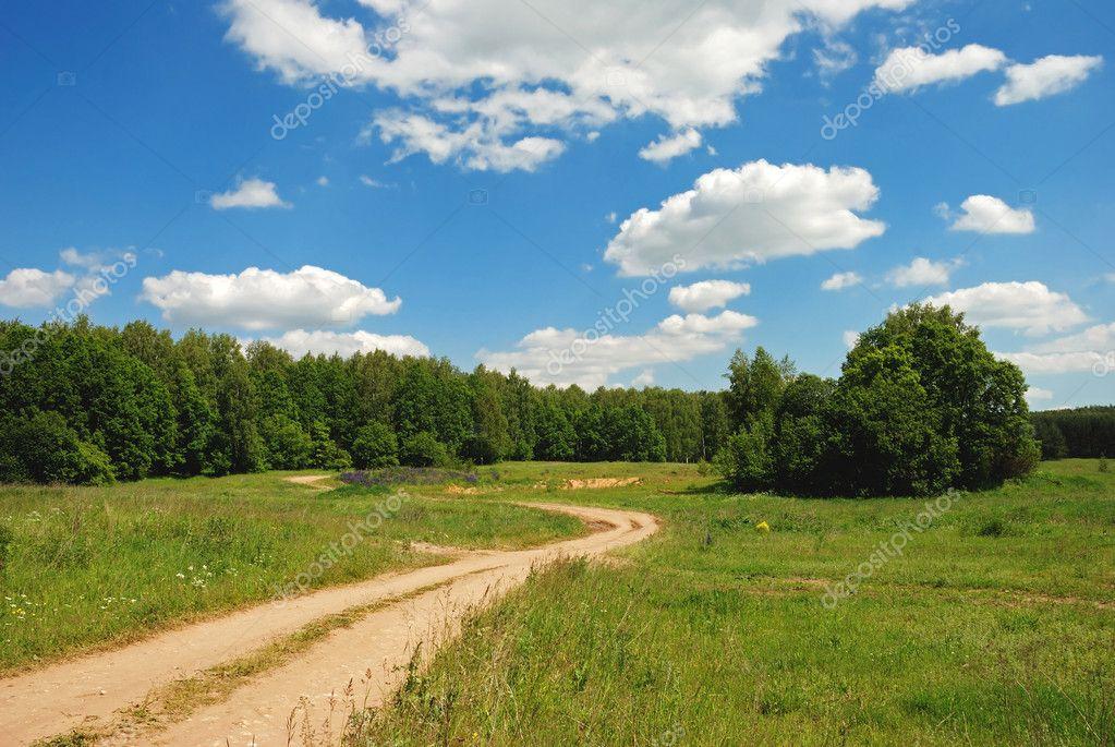 Фотообои Path to the forest