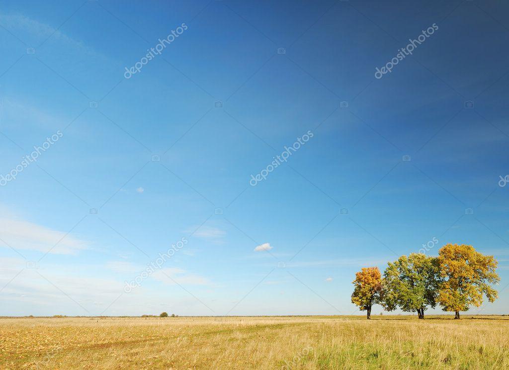 Фотообои Autumn panorama