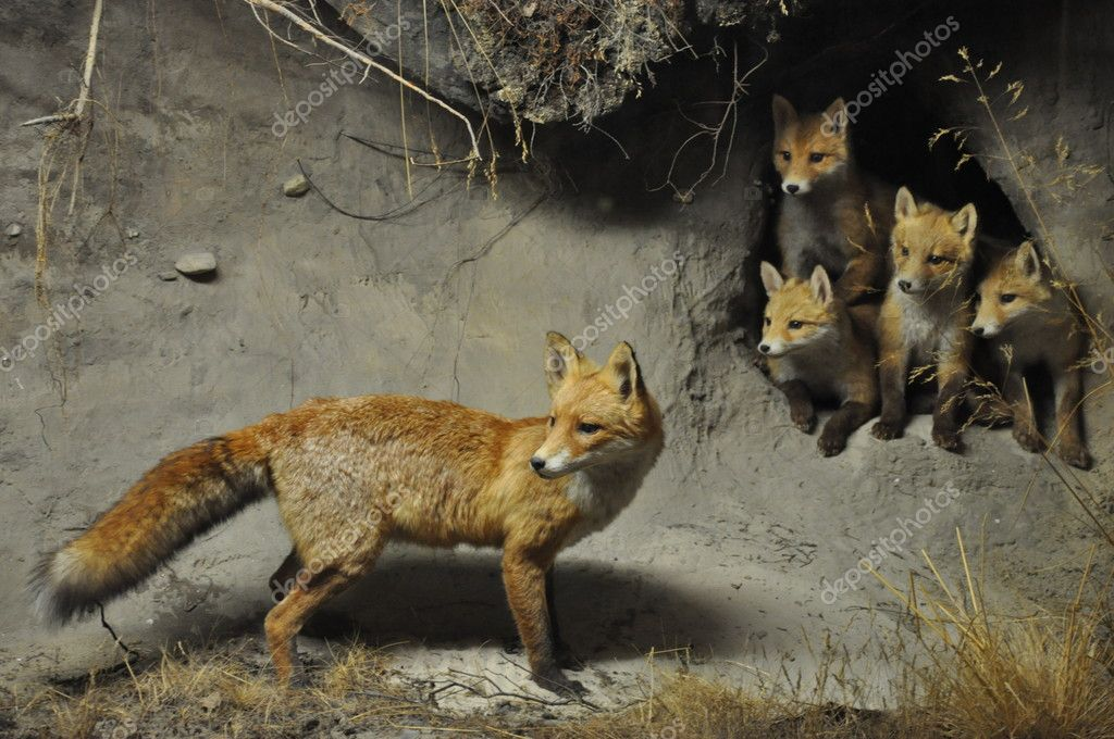 Mother of little foxes