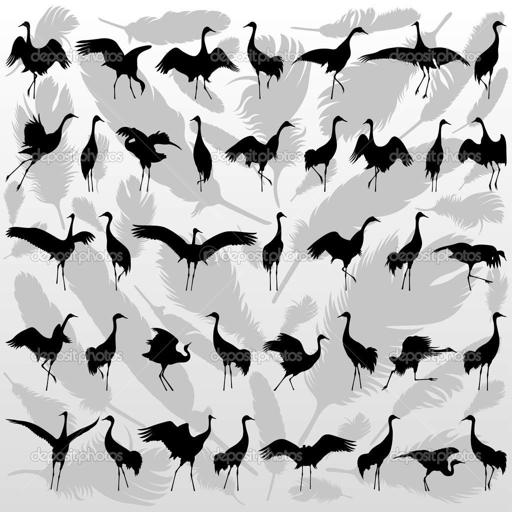 Crane bird and feathers background vector